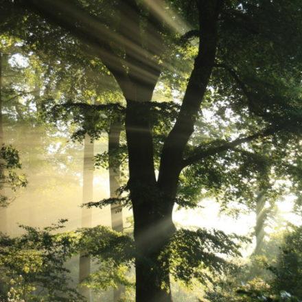dios se viste con hilos de árboles