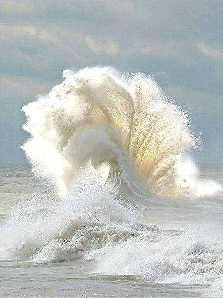 las alas del mar
