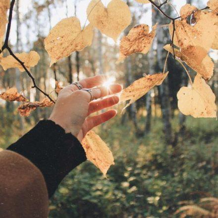 como un árbol le dice gracias al sol