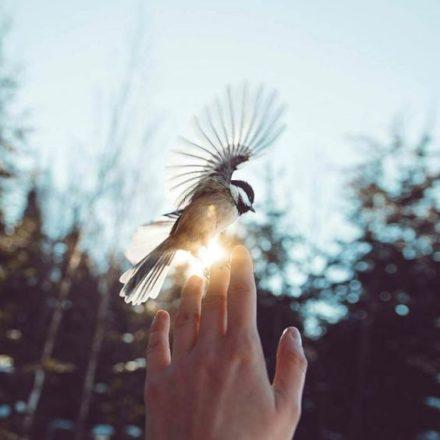 el cantar de las aves